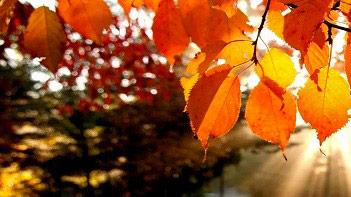 autunnomalcesine